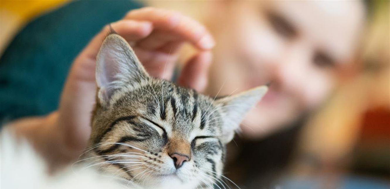 تعرّفوا إلى عوارض حساسية القطط